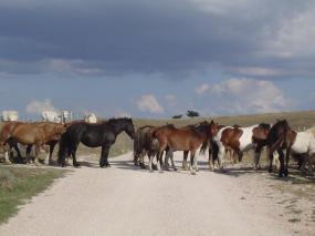 Paarden op de Monte Subasio