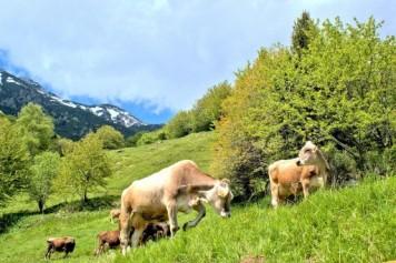 Monte Baldo, Gardameer